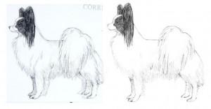 front legs comparison