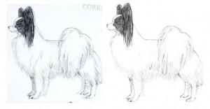 tail comparison