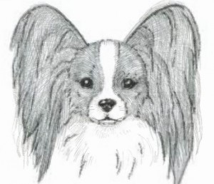Correct Papillon Head Compare