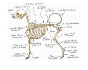 carlson skeleton